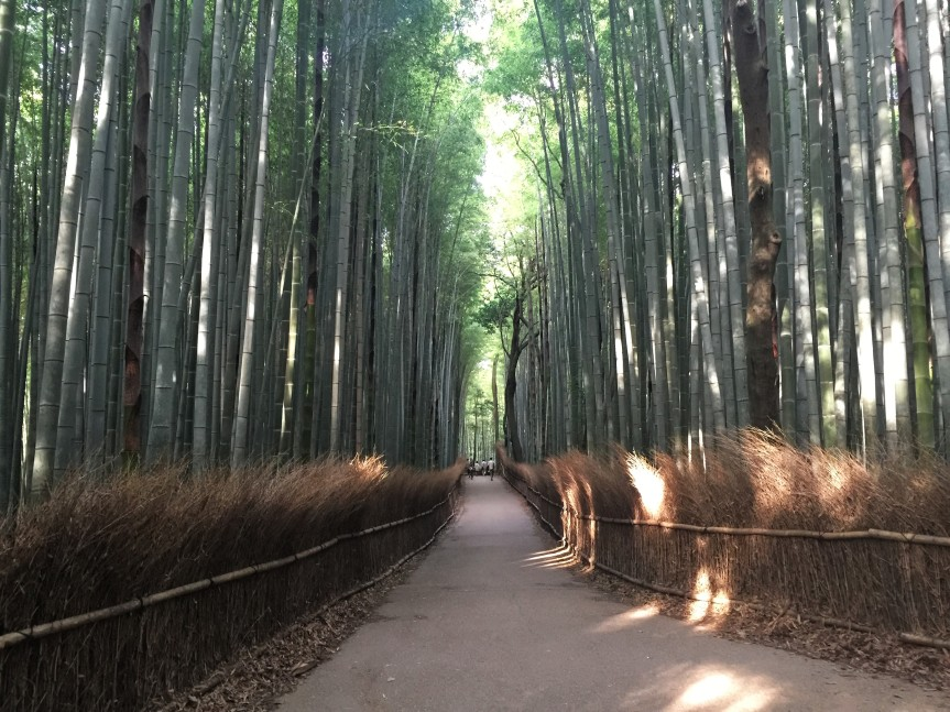 Tokyo and Kyoto – Part 7 – Day 6 Shoraian